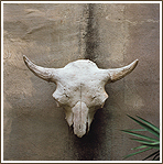 Buffalo Skull on Adobe Wall
